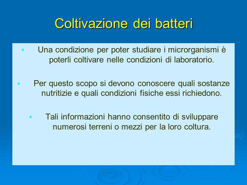 Coltivazione dei batteri Una condizione per poter studiare i microrganismi è poterli coltivare nelle condizioni di laboratorio. Per questo scopo si de