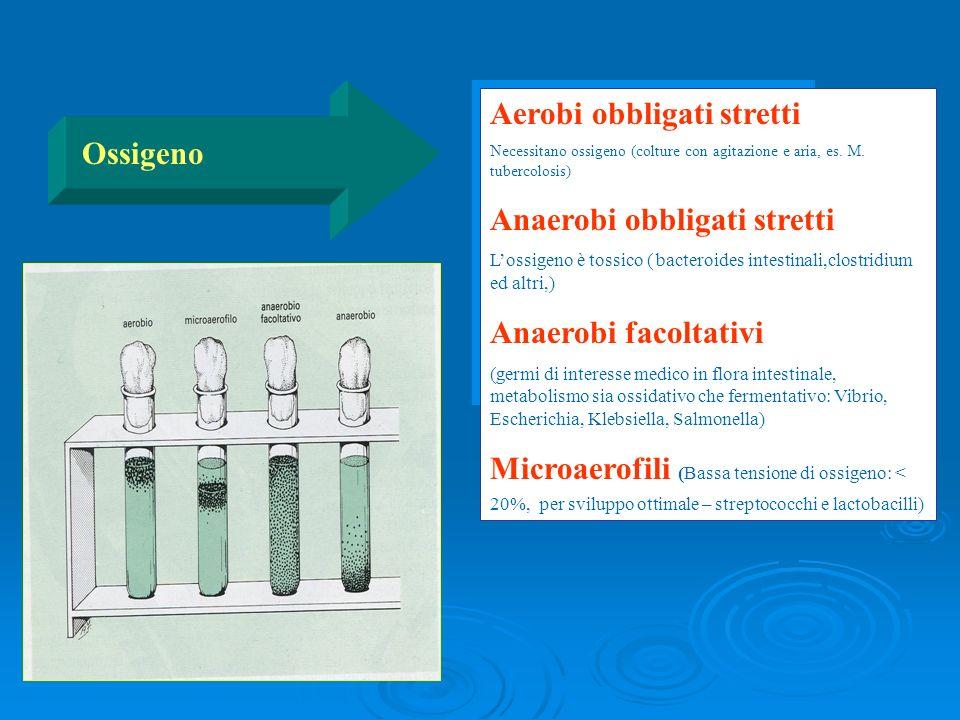 Aerobi obbligati stretti Necessitano ossigeno (colture con agitazione e aria, es. M. tubercolosis) Anaerobi obbligati stretti Lossigeno è tossico ( ba