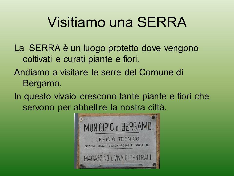 Visitiamo una SERRA La SERRA è un luogo protetto dove vengono coltivati e curati piante e fiori. Andiamo a visitare le serre del Comune di Bergamo. In