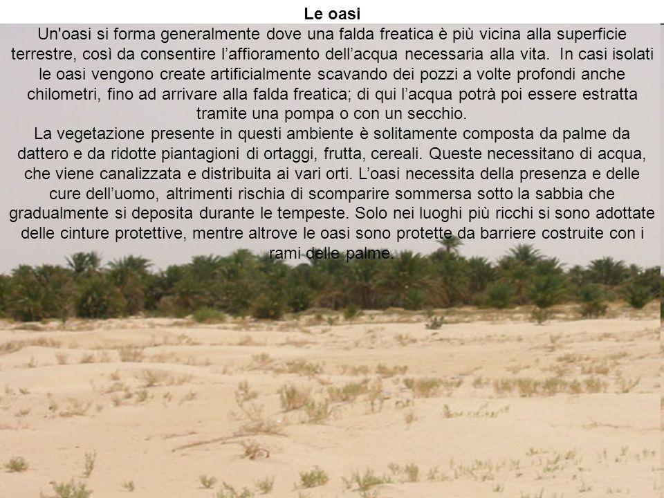 Le oasi Un'oasi si forma generalmente dove una falda freatica è più vicina alla superficie terrestre, così da consentire laffioramento dellacqua neces
