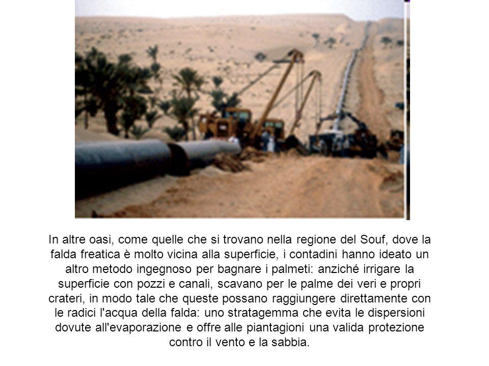 Coltivare le oasi Nelle zone desertiche lagricoltura è praticata soltanto nelle oasi.