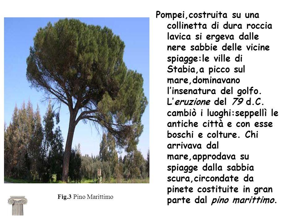 Pompei,costruita su una collinetta di dura roccia lavica si ergeva dalle nere sabbie delle vicine spiagge:le ville di Stabia,a picco sul mare,dominava