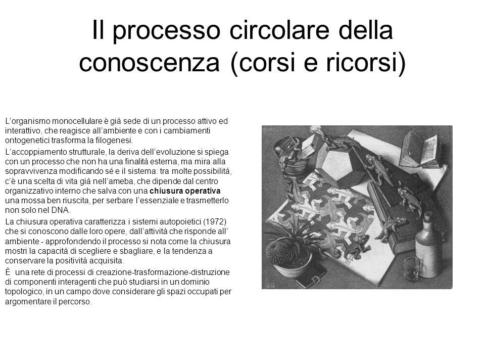 Il processo circolare della conoscenza (corsi e ricorsi) Lorganismo monocellulare è già sede di un processo attivo ed interattivo, che reagisce allamb