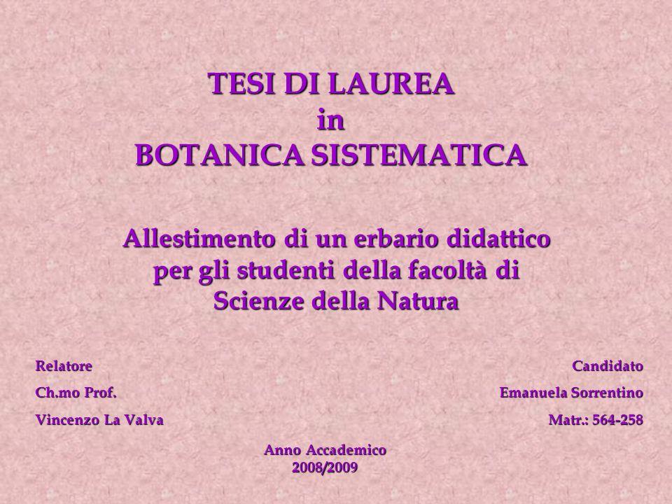 TESI DI LAUREA in BOTANICA SISTEMATICA Allestimento di un erbario didattico per gli studenti della facoltà di Scienze della Natura Relatore Ch.mo Prof.