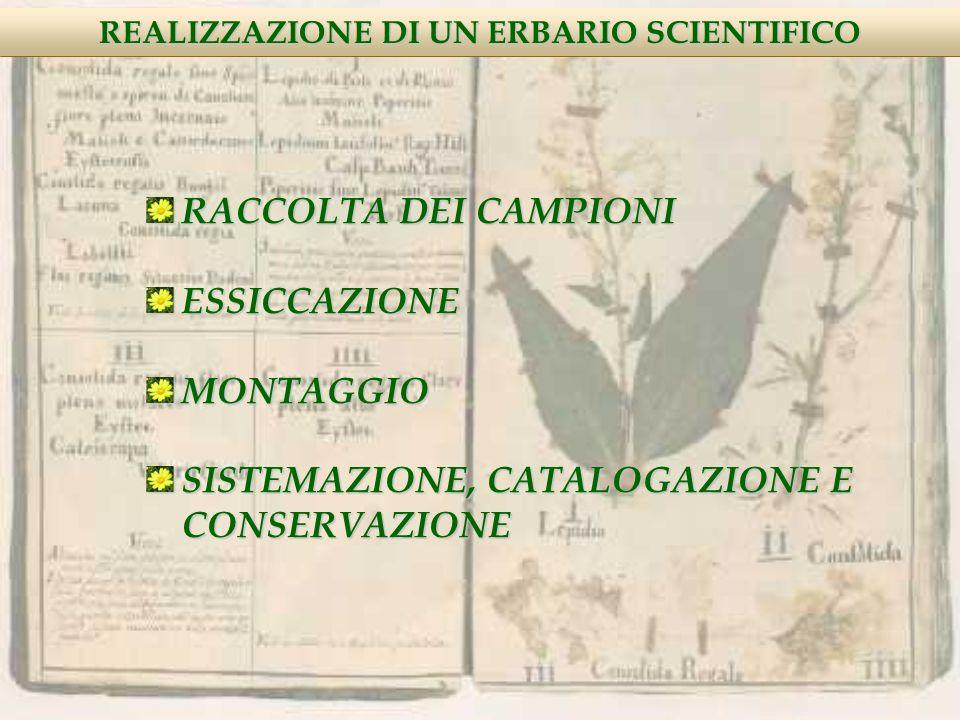 RACCOLTA DEI CAMPIONI ESSICCAZIONE MONTAGGIO SISTEMAZIONE, CATALOGAZIONE E CONSERVAZIONE REALIZZAZIONE DI UN ERBARIO SCIENTIFICO