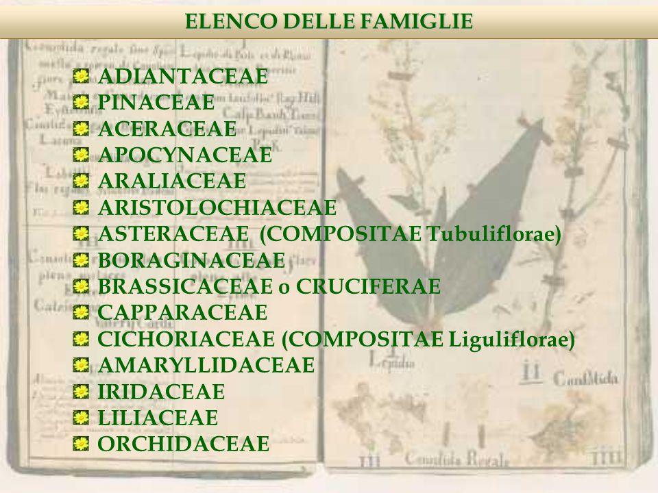 ELENCO DELLE FAMIGLIE ADIANTACEAE PINACEAE ACERACEAE APOCYNACEAE ARALIACEAE ARISTOLOCHIACEAE ASTERACEAE (COMPOSITAE Tubuliflorae) BORAGINACEAE BRASSICACEAE o CRUCIFERAE CAPPARACEAE CICHORIACEAE (COMPOSITAE Liguliflorae) AMARYLLIDACEAE IRIDACEAE LILIACEAE ORCHIDACEAE