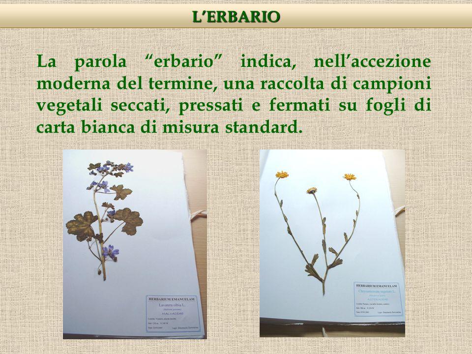 La parola erbario indica, nellaccezione moderna del termine, una raccolta di campioni vegetali seccati, pressati e fermati su fogli di carta bianca di misura standard.