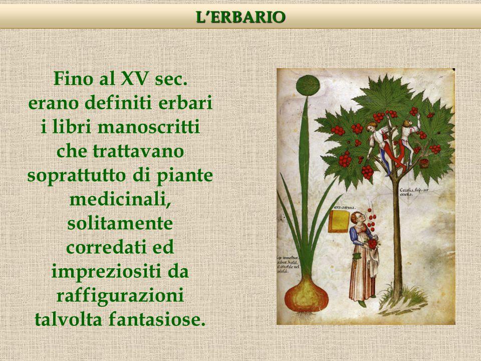 Durante il periodo Rinascimentale, Luca Ghini, professore dei semplici medicinali alle Università di Pisa e Bologna, era solito presentare ai suoi studenti delle piante essiccate proprio a scopo didattico, per facilitare il riconoscimento e lo studio dei campioni vegetali.