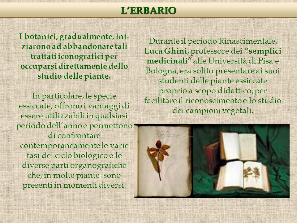 LERBARIO Solo nel XIX sec., però, lerbario diventa uno strumento di lavoro indispensabile, in particolare per i botanici sistematici.