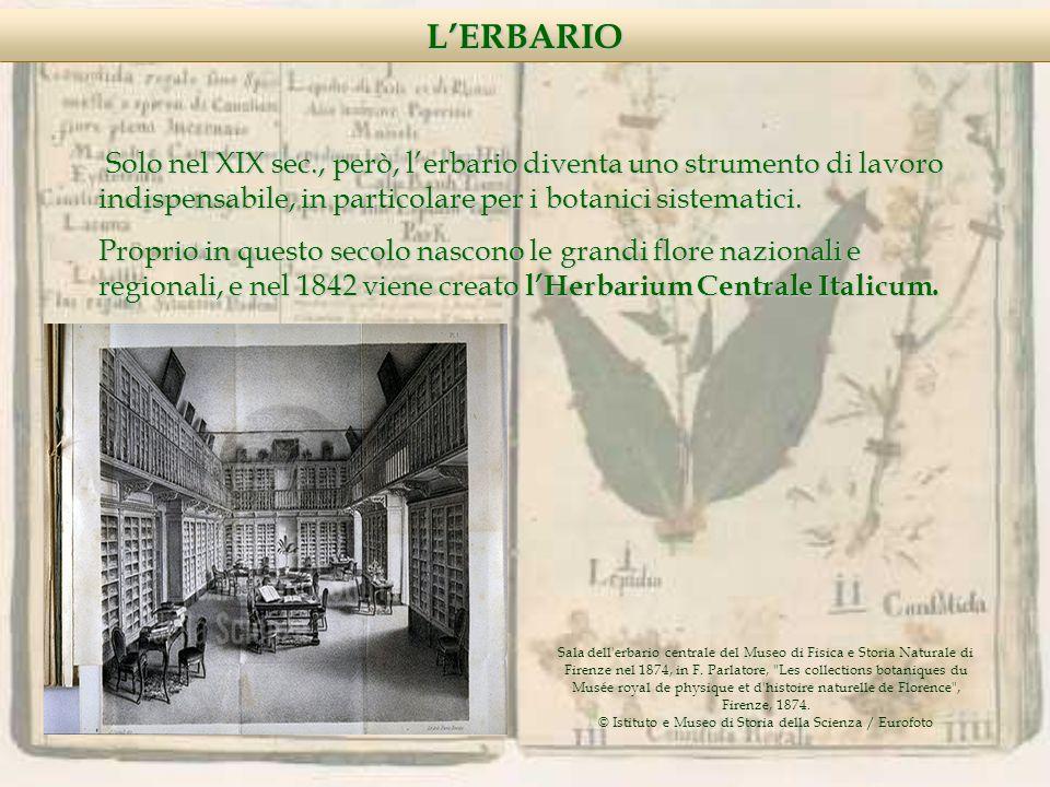 Nella concezione classica, le Liliaceae vengono divise in tribù, di queste, le principali sono:ColchicoideaeLilioideaeAsparagoideaeDracaenoideae LILIACEAE