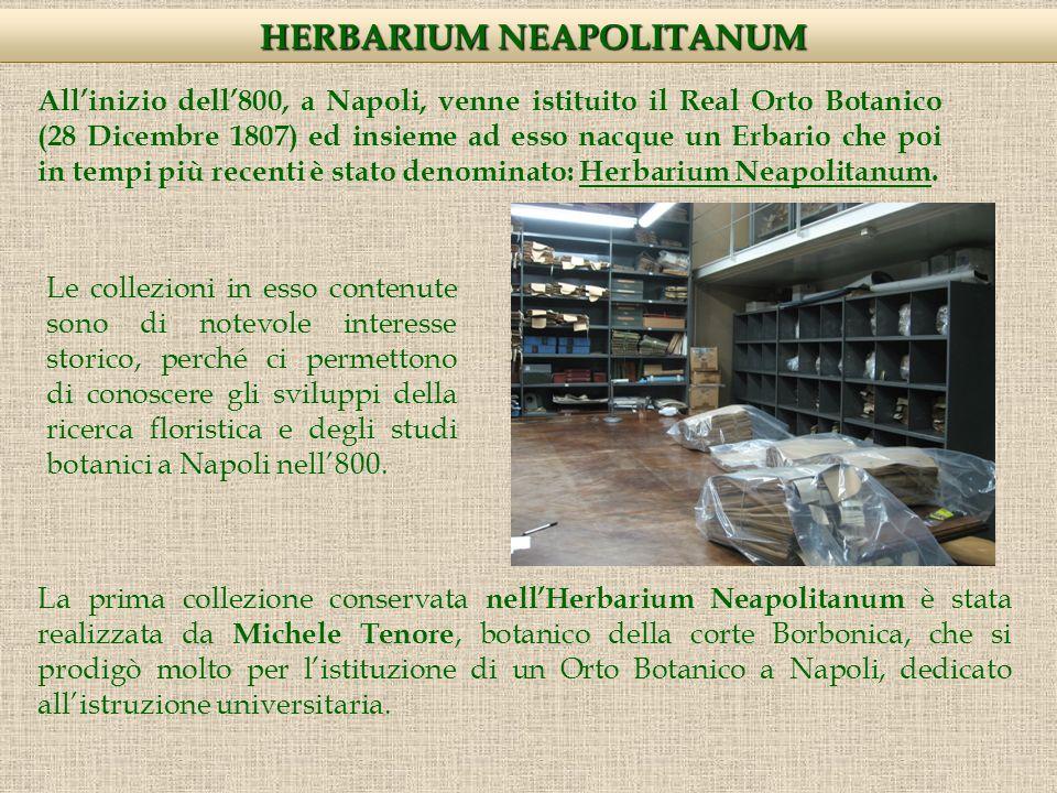 Allinizio dell800, a Napoli, venne istituito il Real Orto Botanico (28 Dicembre 1807) ed insieme ad esso nacque un Erbario che poi in tempi più recenti è stato denominato: Herbarium Neapolitanum.