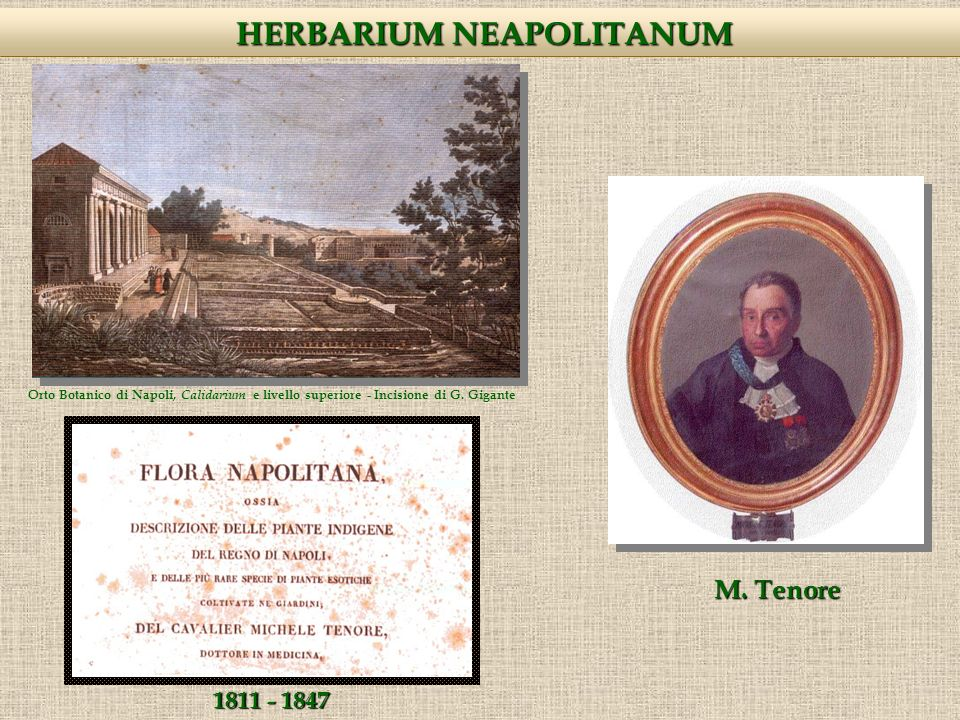 Raccolte più antiche: 1796, M.Tenore (1780 – 1861) Exsiccata più antichi: 1600, ??.
