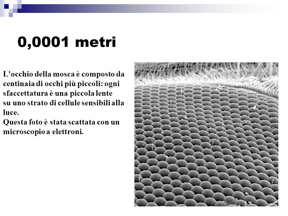 0,0001 metri L occhio della mosca è composto da centinaia di occhi più piccoli: ogni sfaccettatura è una piccola lente su uno strato di cellule sensibili alla luce.