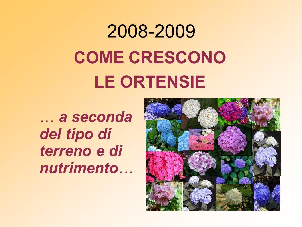 2008-2009 COME CRESCONO LE ORTENSIE … a seconda del tipo di terreno e di nutrimento…