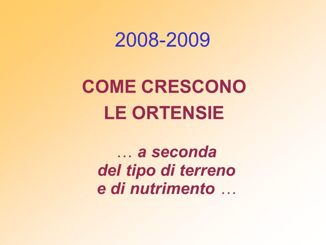 COME CRESCONO LE ORTENSIE 2008-2009 … a seconda del tipo di terreno e di nutrimento …