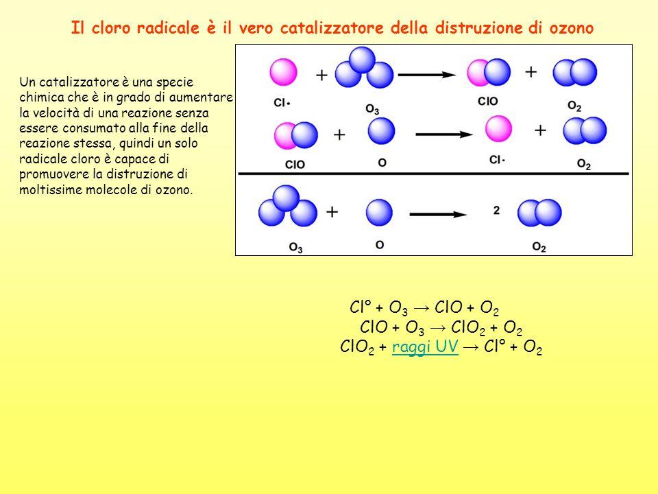 Il cloro radicale è il vero catalizzatore della distruzione di ozono Un catalizzatore è una specie chimica che è in grado di aumentare la velocità di
