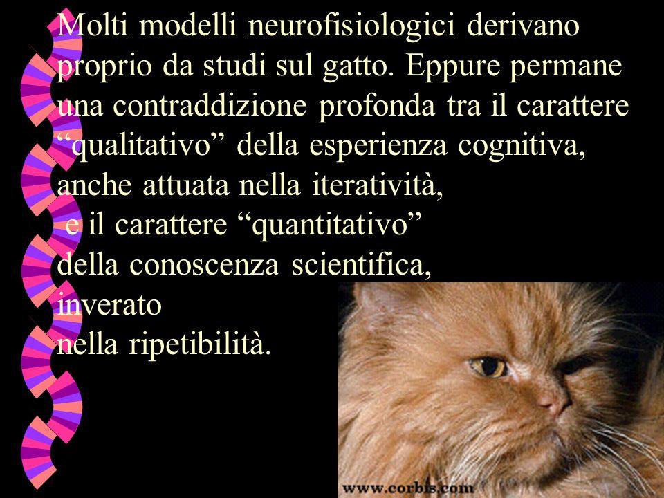 Molti modelli neurofisiologici derivano proprio da studi sul gatto.