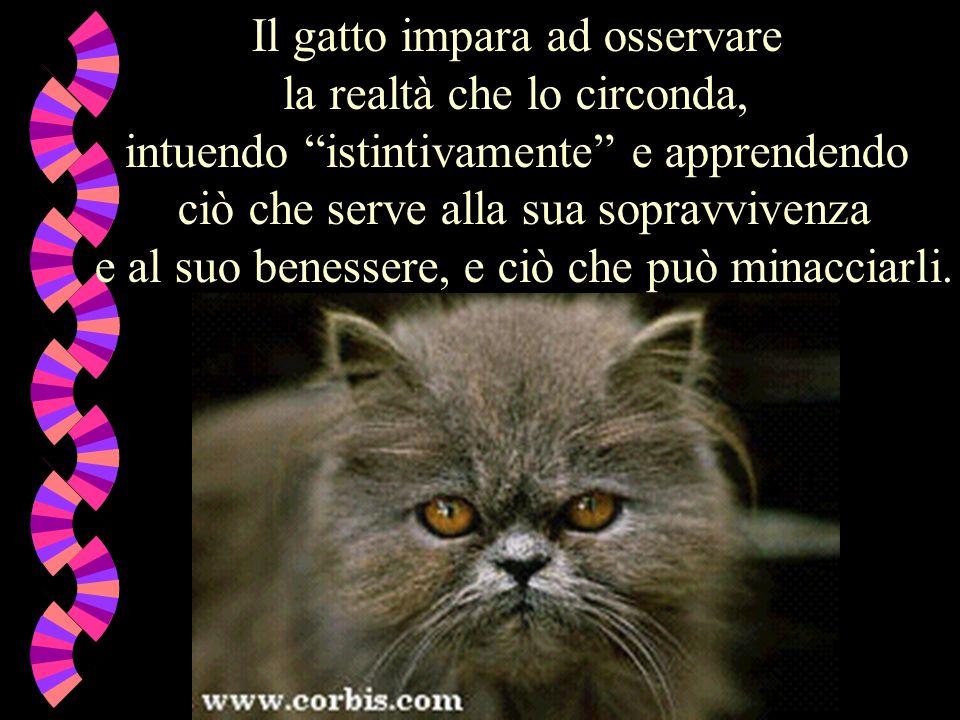 Il gatto impara ad osservare la realtà che lo circonda, intuendo istintivamente e apprendendo ciò che serve alla sua sopravvivenza e al suo benessere, e ciò che può minacciarli.