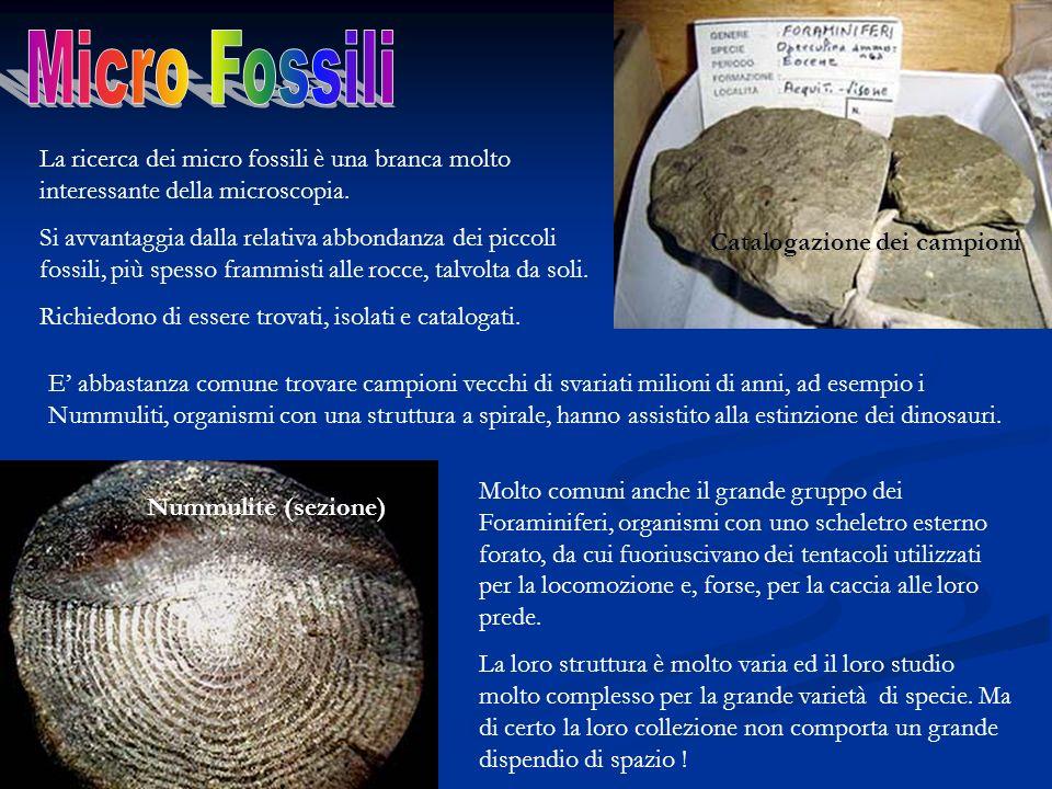 La ricerca dei micro fossili è una branca molto interessante della microscopia. Si avvantaggia dalla relativa abbondanza dei piccoli fossili, più spes