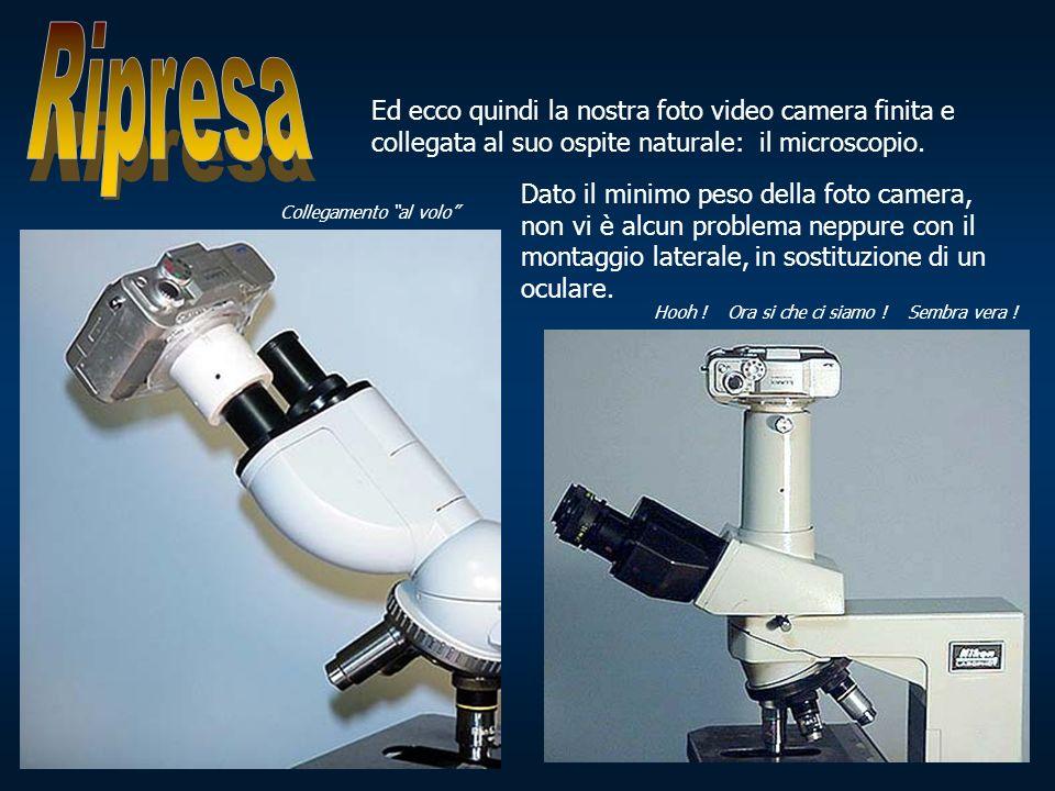 Ed ecco quindi la nostra foto video camera finita e collegata al suo ospite naturale: il microscopio. Collegamento al volo Hooh ! Ora si che ci siamo