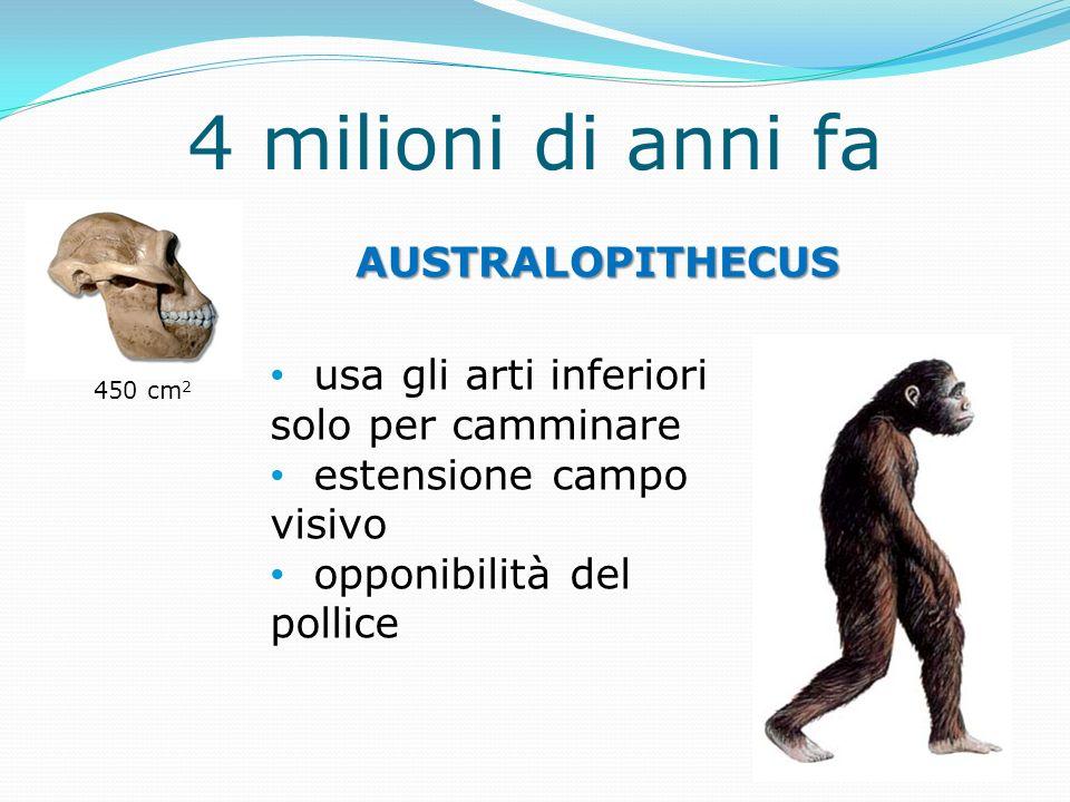 4 milioni di anni fa AUSTRALOPITHECUS usa gli arti inferiori solo per camminare estensione campo visivo opponibilità del pollice 450 cm 2