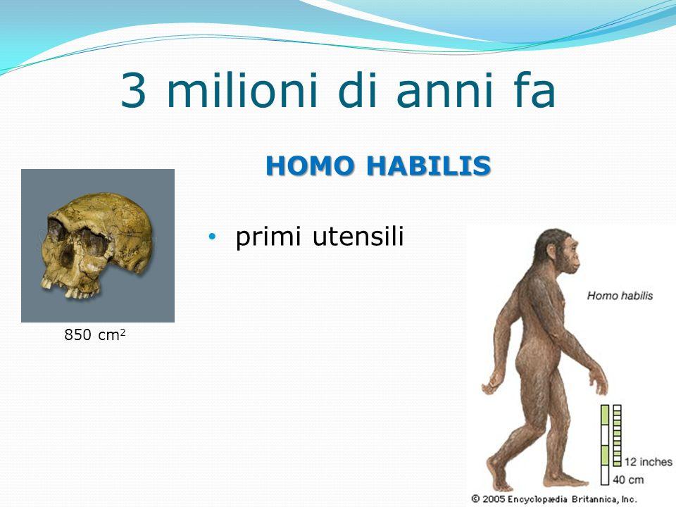 3 milioni di anni fa HOMO HABILIS primi utensili 850 cm 2