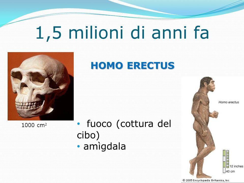1,5 milioni di anni fa HOMO ERECTUS fuoco (cottura del cibo) amìgdala 1000 cm 2