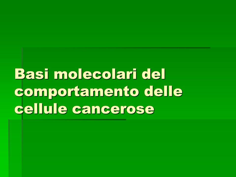 Se manca p53 La cellula muore La cellula prolifera con il genoma danneggiato Perdita dei geni soppressori dei tumori Attivazione di oncogeni (Inoltre la cellula tumorale senza p53 risulta molto meno sensibile allirradiazione e a molti farmaci anticancro, che altrimenti provocherebbero la loro morte o larresto della loro proliferazione).