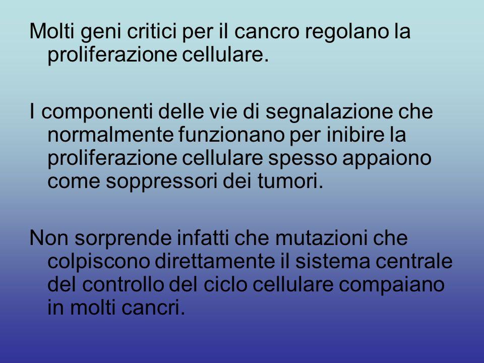 La crescita continua di un cancro richiede cambiamenti ereditabili che non solo sregolano la progressione del ciclo cellulare, ma provocano anche crescita cellulare.