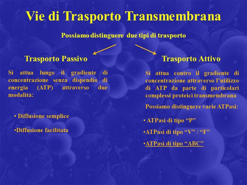 Vie di Trasporto Transmembrana Possiamo distinguere due tipi di trasporto Trasporto PassivoTrasporto Attivo Si attua lungo il gradiente di concentrazi