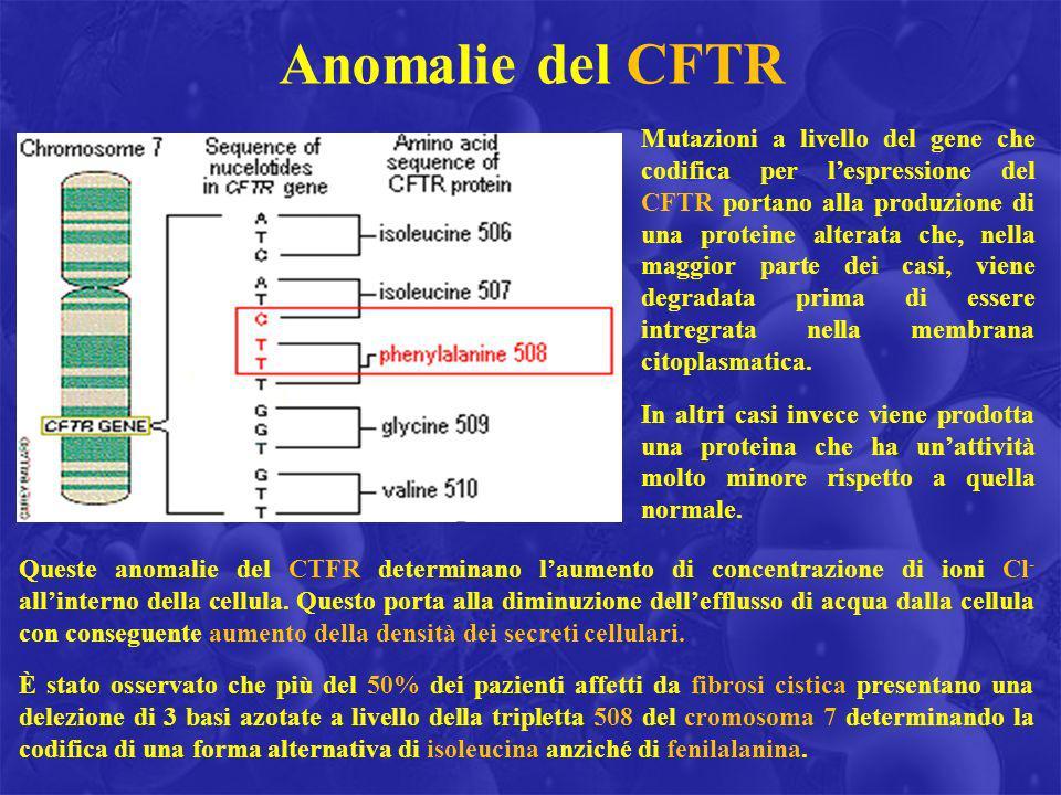 Anomalie del CFTR Mutazioni a livello del gene che codifica per lespressione del CFTR portano alla produzione di una proteine alterata che, nella magg