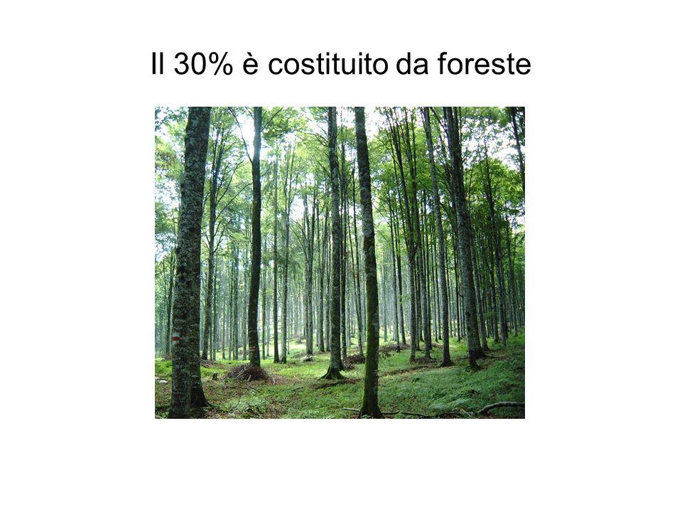 Il 30% è costituito da foreste