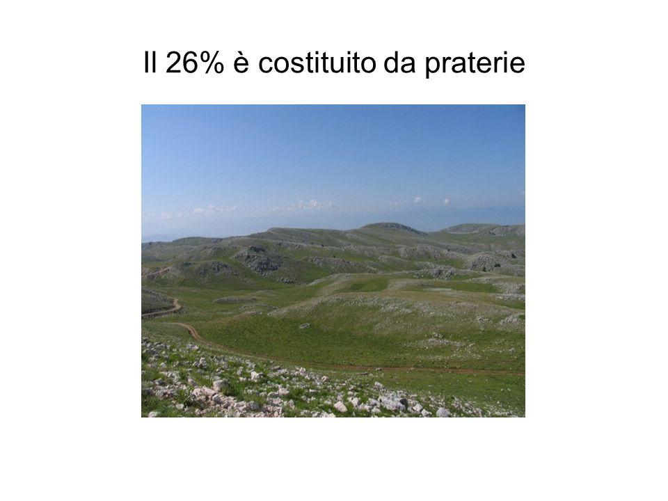 Il 26% è costituito da praterie