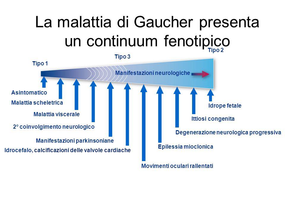 La malattia di Gaucher presenta un continuum fenotipico Tipo 1 Tipo 3 Tipo 2 Manifestazioni neurologiche Idrocefalo, calcificazioni delle valvole cardiache Epilessia mioclonica Movimenti oculari rallentati Manifestazioni parkinsoniane 2º coinvolgimento neurologico Malattia viscerale Asintomatico Malattia scheletrica Degenerazione neurologica progressiva Ittiosi congenita Idrope fetale