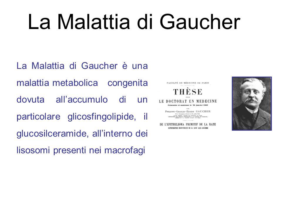 La Malattia di Gaucher La Malattia di Gaucher è una malattia metabolica congenita dovuta allaccumulo di un particolare glicosfingolipide, il glucosilceramide, allinterno dei lisosomi presenti nei macrofagi