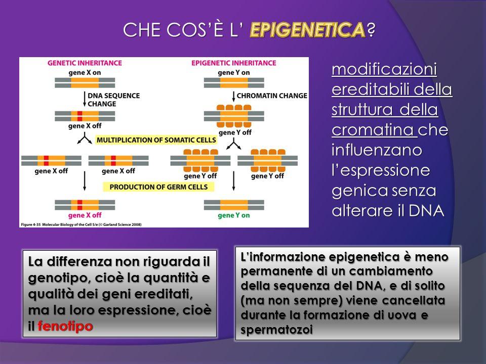 modificazioni ereditabili della struttura della cromatina che influenzano lespressione genica senza alterare il DNA La differenza non riguarda il geno