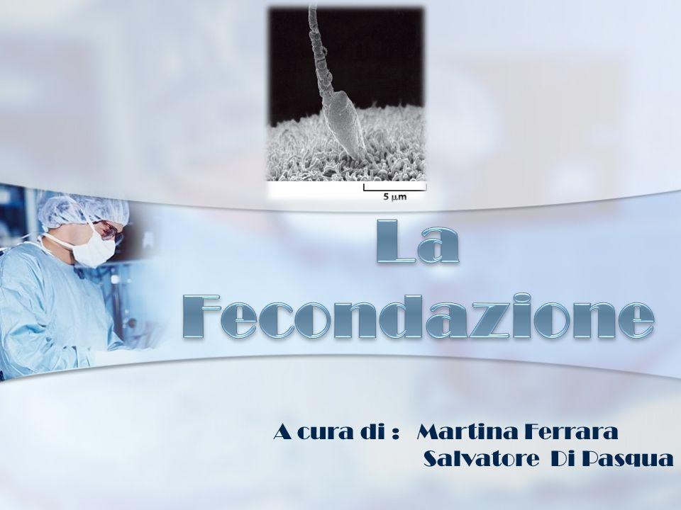 A cura di : Martina Ferrara Salvatore Di Pasqua
