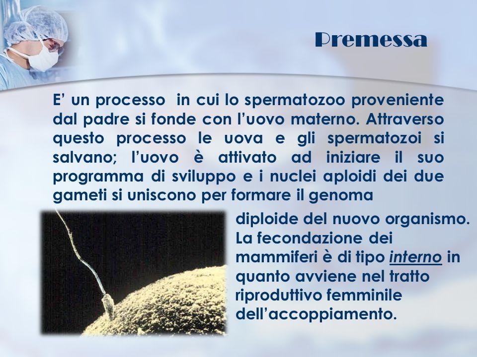 E un processo in cui lo spermatozoo proveniente dal padre si fonde con luovo materno. Attraverso questo processo le uova e gli spermatozoi si salvano;