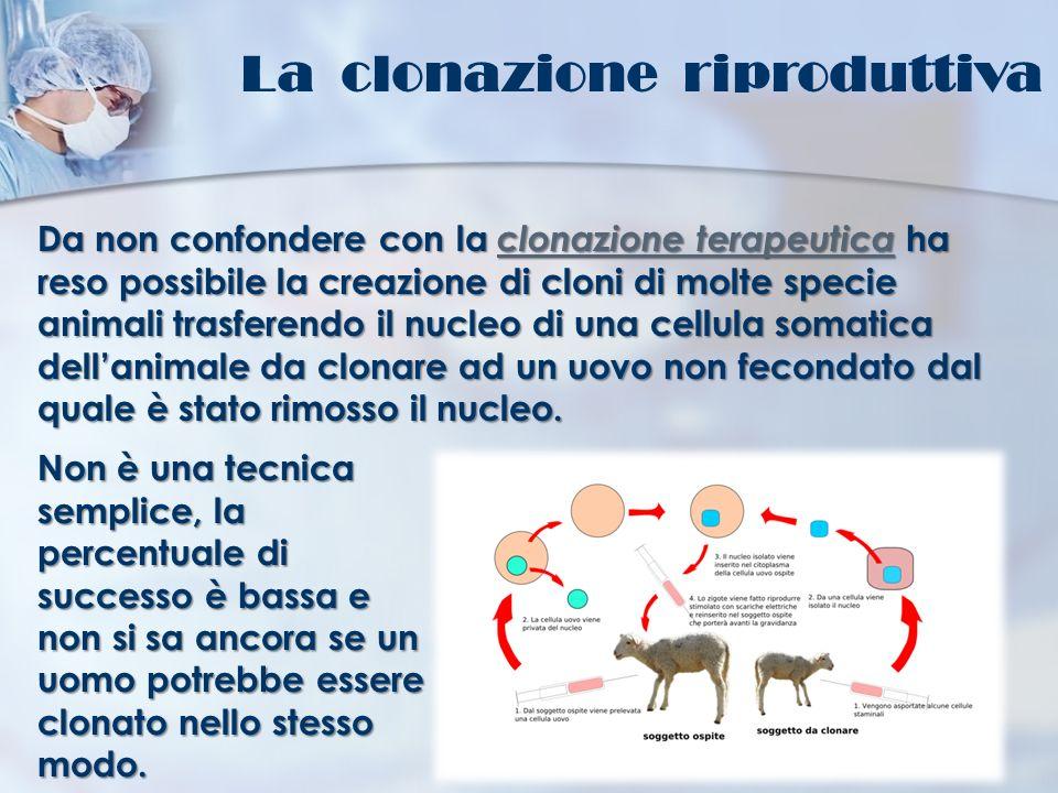 La clonazione riproduttiva Da non confondere con la clonazione terapeutica ha reso possibile la creazione di cloni di molte specie animali trasferendo
