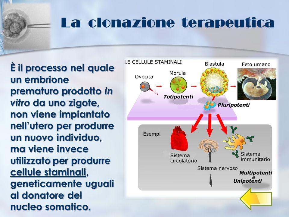 La clonazione terapeutica È il processo nel quale un embrione prematuro prodotto in vitro da uno zigote, non viene impiantato nellutero per produrre u