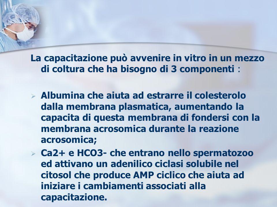 La capacitazione può avvenire in vitro in un mezzo di coltura che ha bisogno di 3 componenti : Albumina che aiuta ad estrarre il colesterolo dalla mem