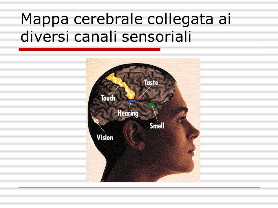 Mappa cerebrale collegata ai diversi canali sensoriali