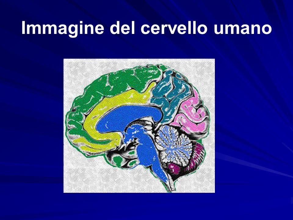 Immagine del cervello umano