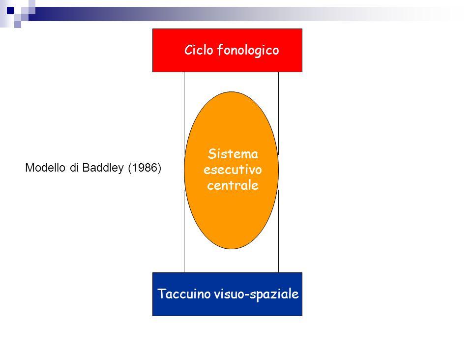 Sistema esecutivo centrale Ciclo fonologico Taccuino visuo-spaziale Modello di Baddley (1986)