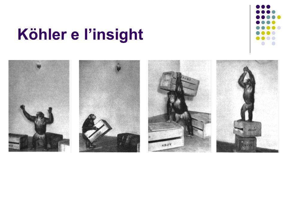 Köhler e linsight