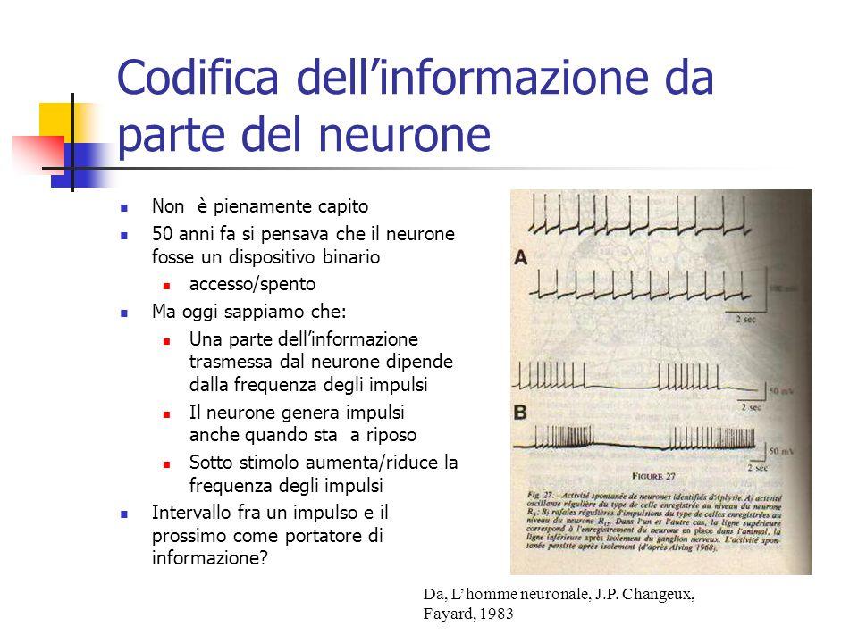 Non è pienamente capito 50 anni fa si pensava che il neurone fosse un dispositivo binario accesso/spento Ma oggi sappiamo che: Una parte dellinformazione trasmessa dal neurone dipende dalla frequenza degli impulsi Il neurone genera impulsi anche quando sta a riposo Sotto stimolo aumenta/riduce la frequenza degli impulsi Intervallo fra un impulso e il prossimo come portatore di informazione.