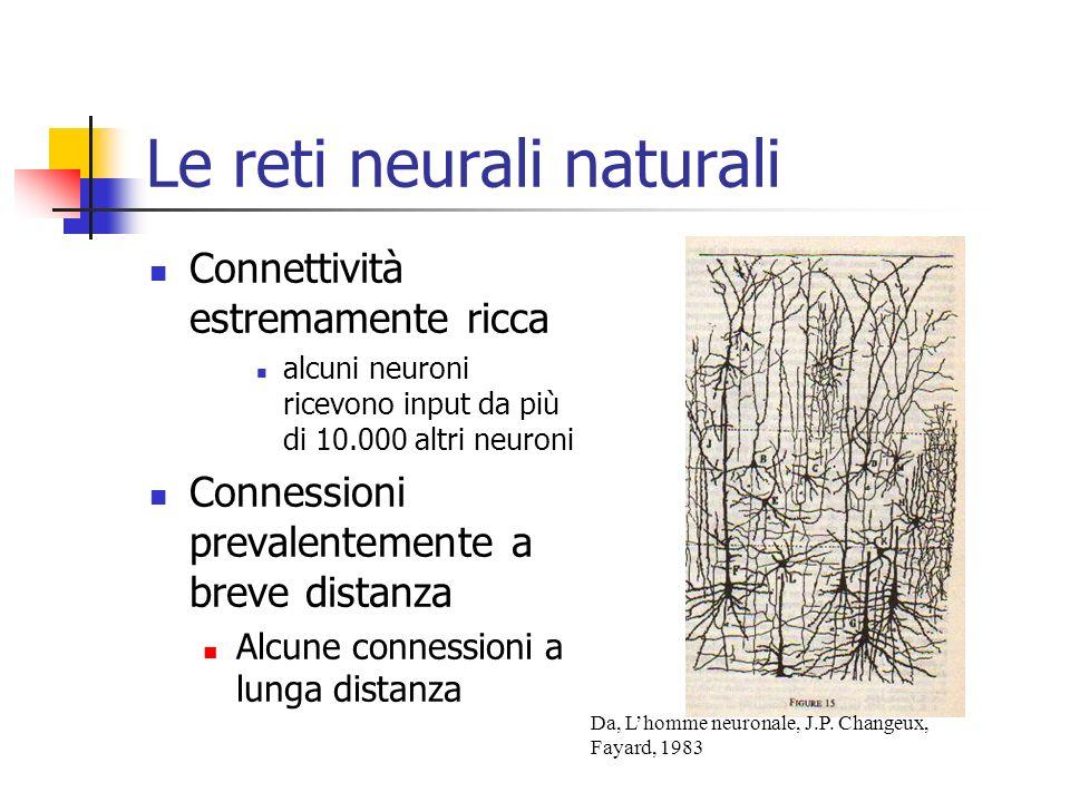 Le reti neurali naturali Connettività estremamente ricca alcuni neuroni ricevono input da più di 10.000 altri neuroni Connessioni prevalentemente a breve distanza Alcune connessioni a lunga distanza Da, Lhomme neuronale, J.P.