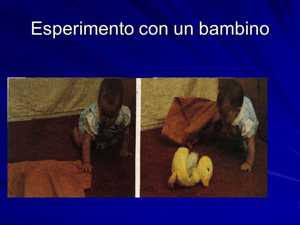 Esperimento con un bambino