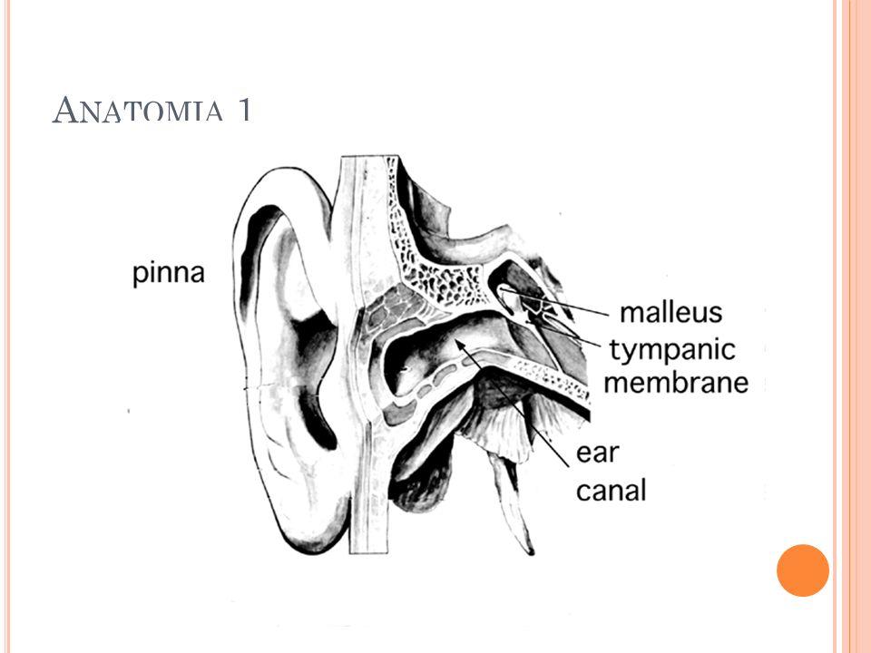 A NATOMIA 1