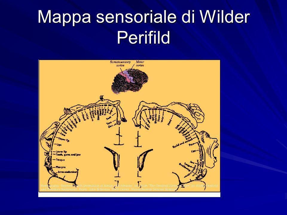 Mappa sensoriale di Wilder Perifild